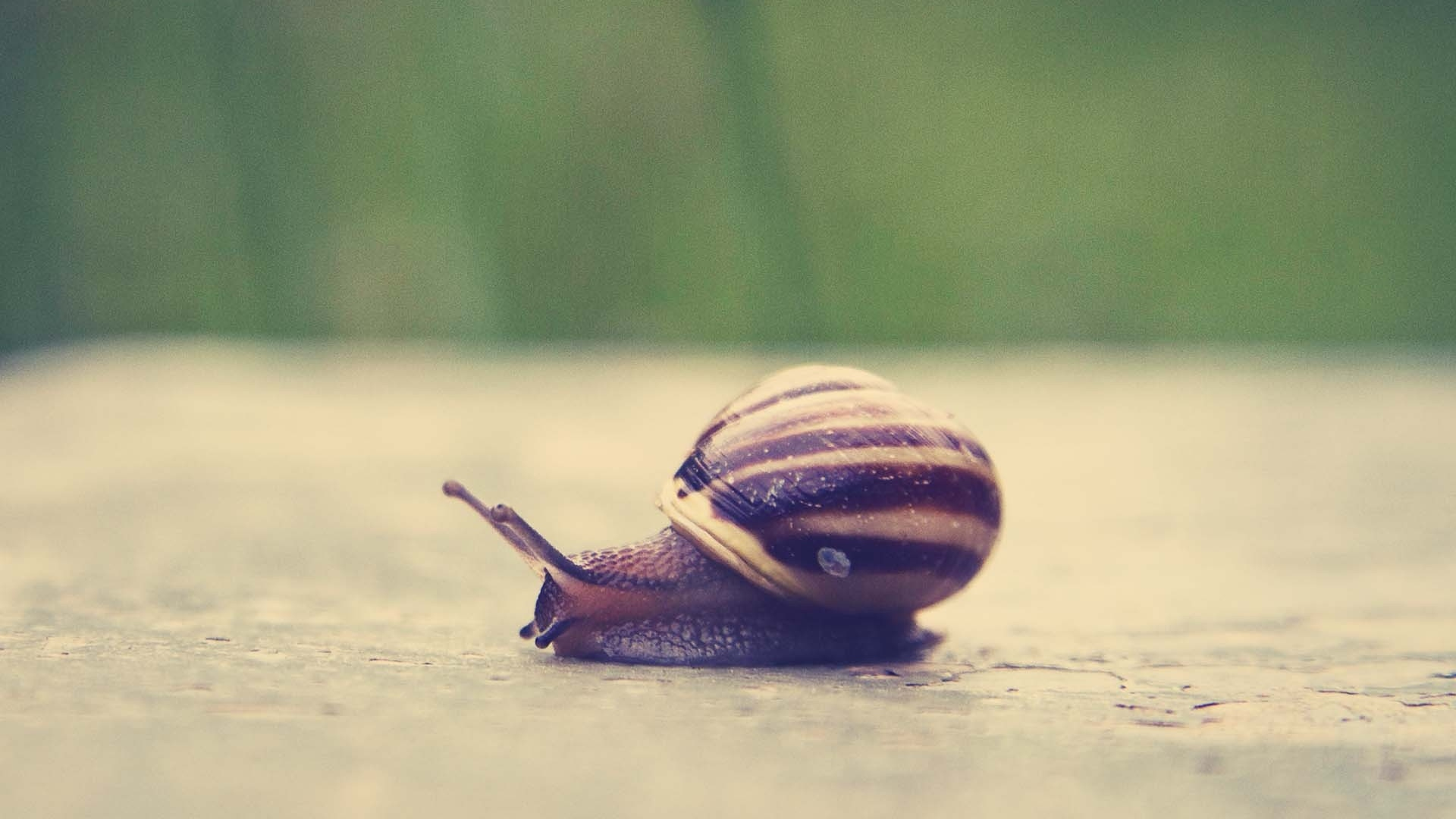 snail wallpaper 35676