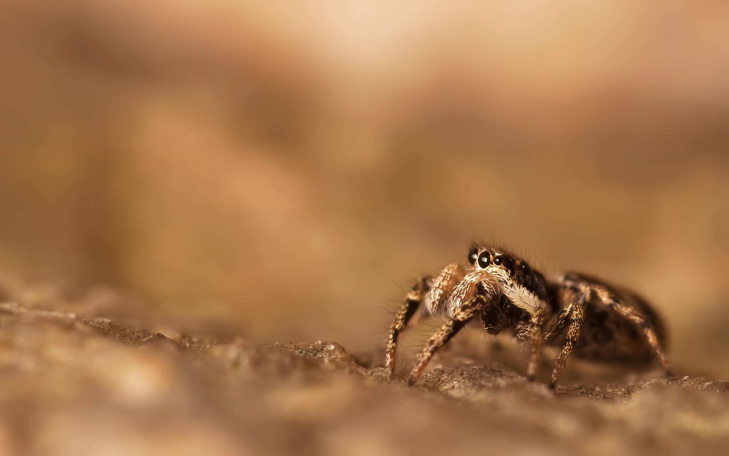 spider wallpaper 23753