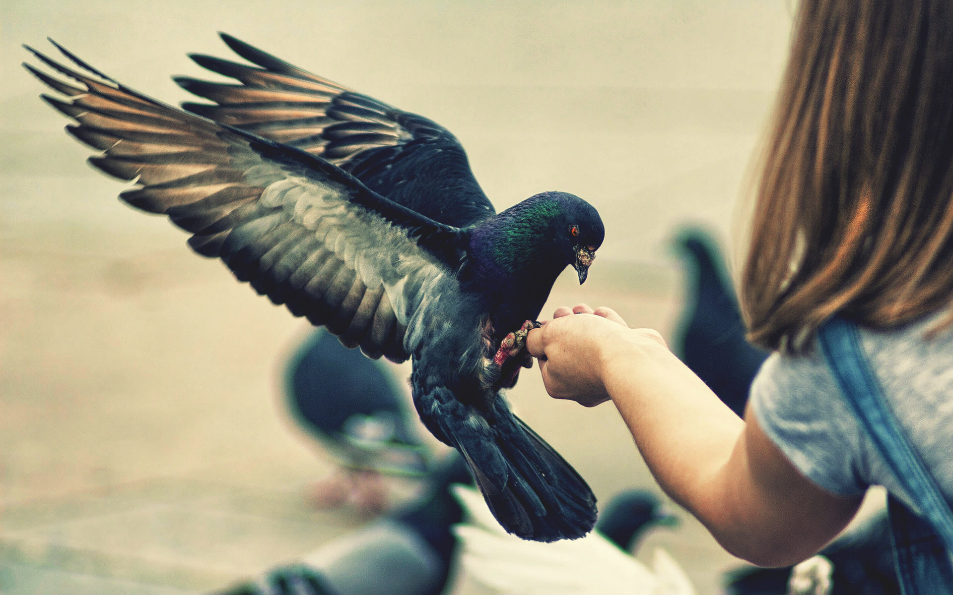 stunning bird in hand wallpaper 39529