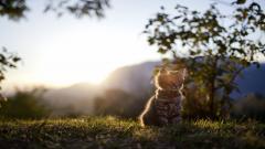 Adorable Cat Nature Wallpaper 44746