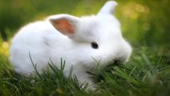 Adorable Rabbit Wallpaper 35240