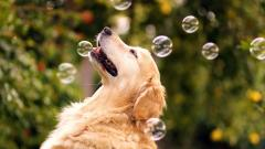 Adorable Soap Bubbles Wallpaper 35002