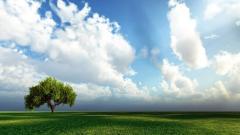 Amazing Grasslands Wallpaper 39648