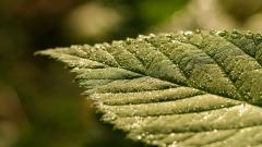 Amazing Leaf Macro Wallpaper 39024