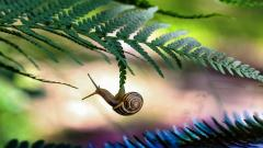 Amazing Snail Wallpaper 35690
