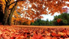 Autumn 33091