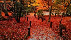 Autumn 33102