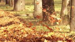 Autumn Leaves 33096