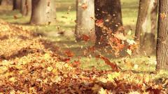 Autumn Leaves 33096