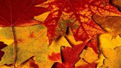 Autumn Leaves 33106