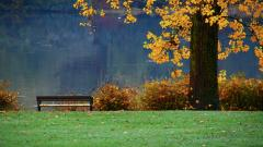 Autumn Leaves Background 33101