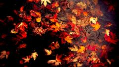 Autumn Leaves Wallpaper 33084