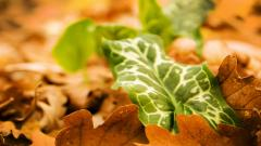 Autumn Leaves Wallpaper 33085