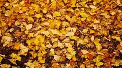 Autumn Leaves Wallpaper 33086