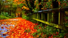 Autumn Leaves Wallpaper 33099
