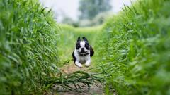 Awesome Dog Nature Wallpaper 44752