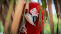 Awesome Macaw Wallpaper 35866