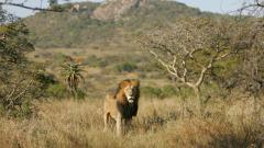 Awesome Safari Wallpaper 21049