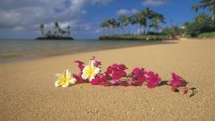 Beach Sand Wallpaper 22203
