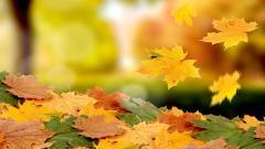 Beautiful Autumn Leaves Wallpaper 33105