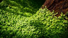 Beautiful Clover Wallpaper 33046