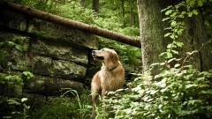 Beautiful Dog Nature Wallpaper 44751