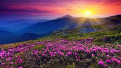 Beautiful Flower Landscape 29011