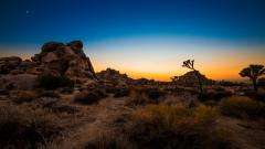 Beautiful Joshua Tree Wallpaper 32952