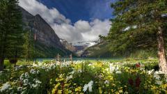 Beautiful Lake Louise Wallpaper 39621