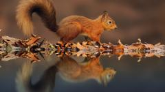 Beautiful Squirrel Wallpaper 34481