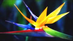 Bird of Paradise Flower 33033