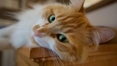 Cat Close Up Wallpapers 39665