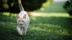 Cat Nature Wallpaper 44745