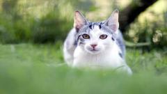 Cat Nature Wallpaper HD 44747