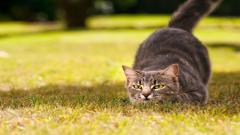 Cat Pictures 24266