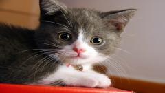 Cat Wallpaper 24261