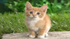 Cat Wallpapers 24255