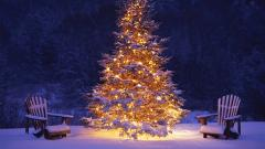 Christmas Tree Wallpaper 22863