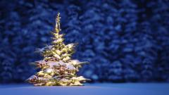 Christmas Tree Wallpaper 22872