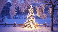 Christmas Tree Wallpapers 22871