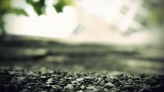 Close Up Wallpaper 35607