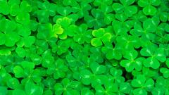 Clover Wallpaper 33044