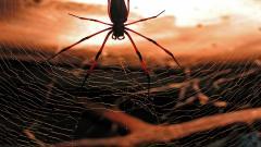 Cool Spider Wallpaper 23755
