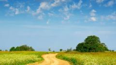 Country Path 29637
