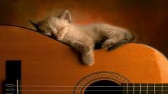 Cute Cat Wallpaper 24249