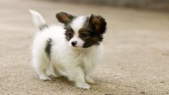 Cute Dogs 14450