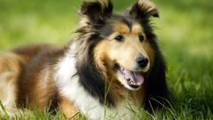 Cute Dogs 14451