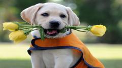 Cute Dogs 14452