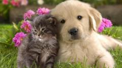 Cute Dogs 14456