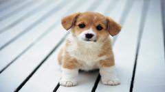 Cute Dogs 14457